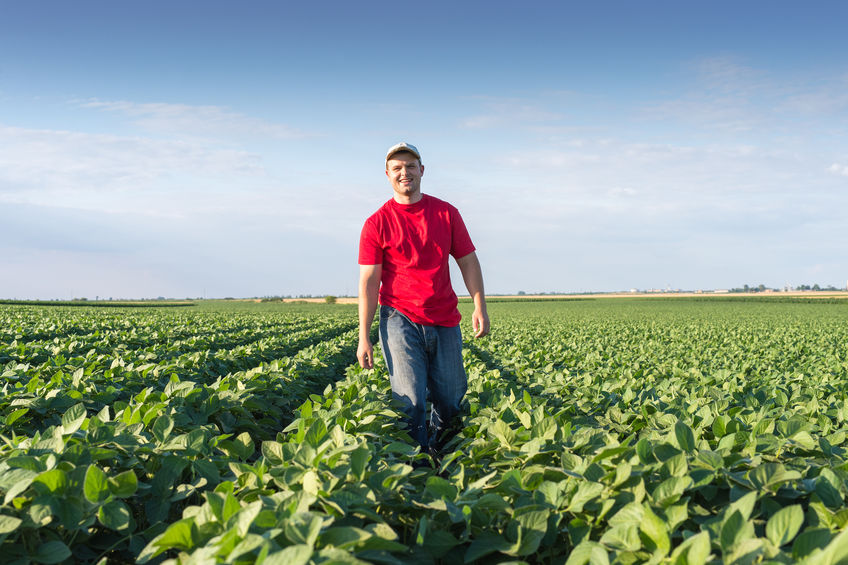 What is Crop Insurance? Do You Need it?