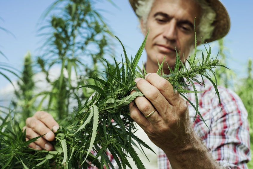 Would You Grow Hemp on Your Farm?