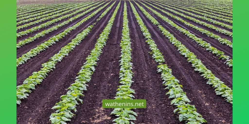 Advantages of Crop Rotation